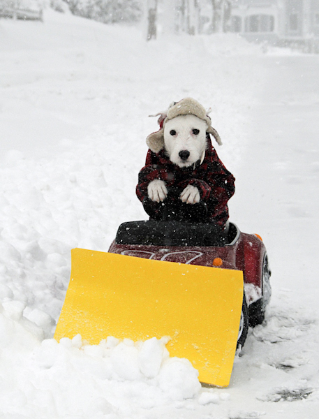 dog-plowing-the-snow